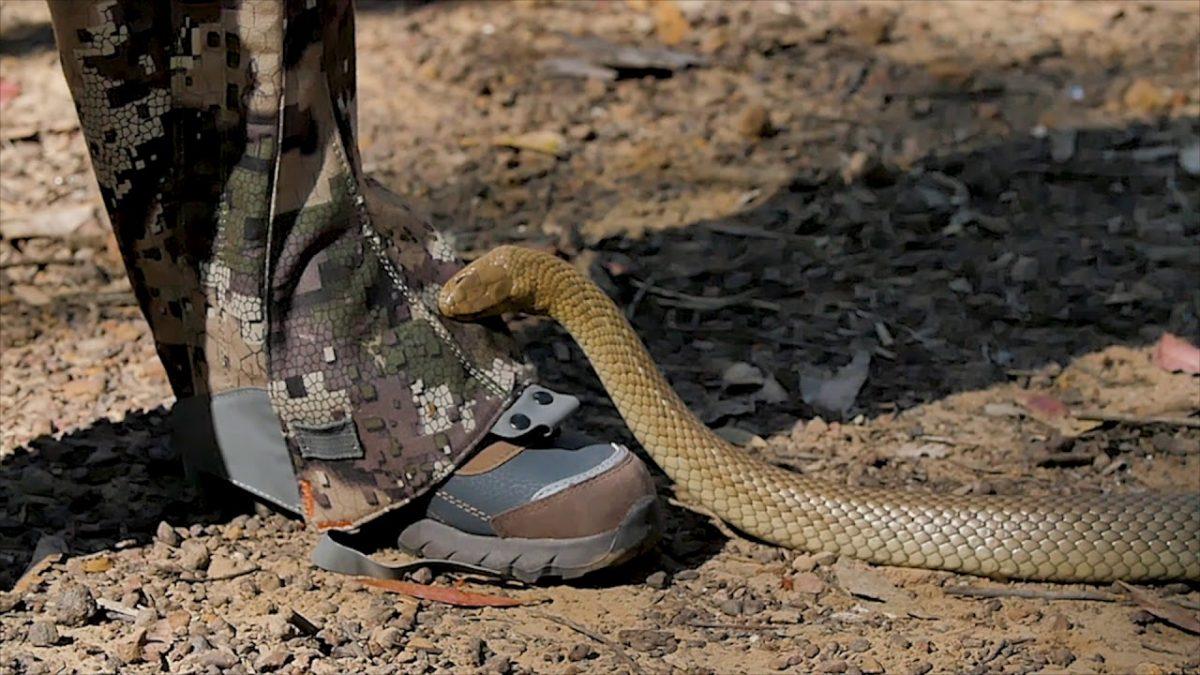 cabela's snake proof gaiters