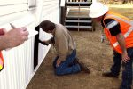 cheap home inspectors near me