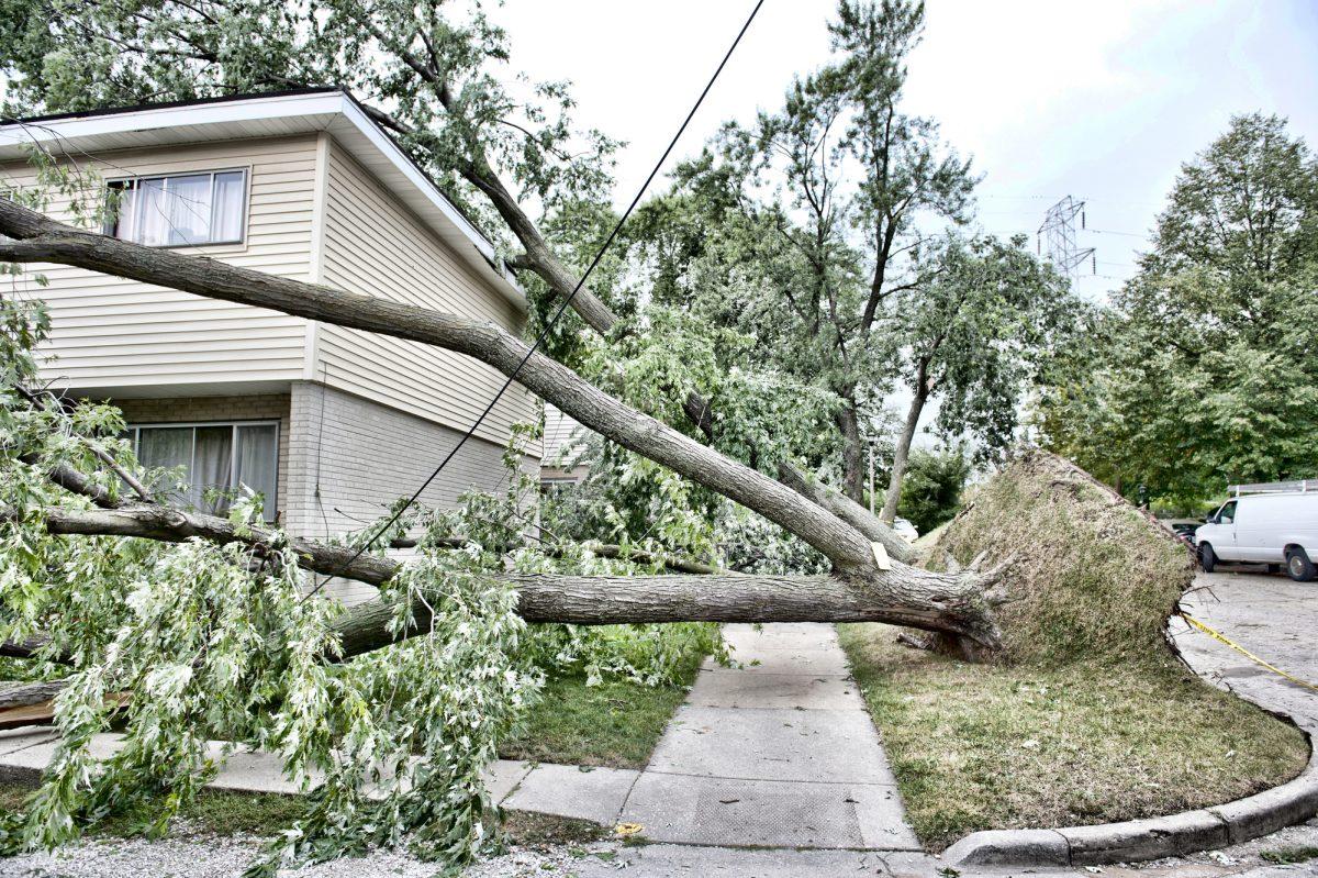 Wind Destruction Outdoors