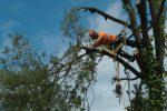 arborist certification